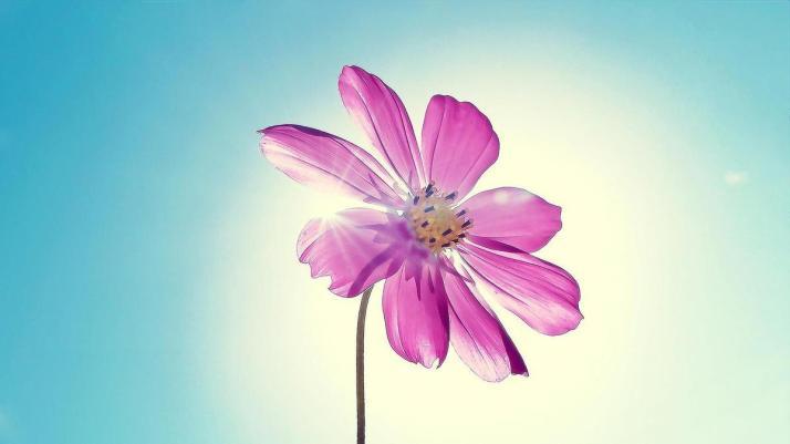 fleur2